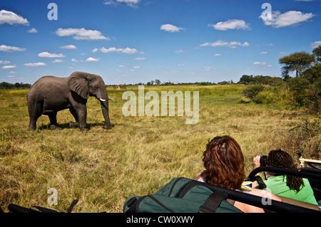 Tourists watching elephant on safari trip. Botswana, Africa. - Stock Photo