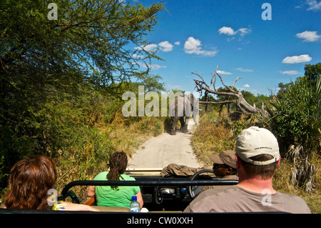 Tourists watching elephant on a safari trip in Botswana, Africa. - Stock Photo