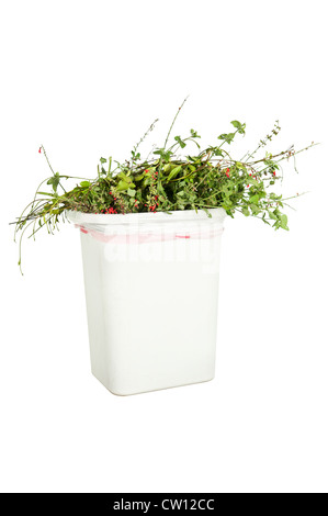 A white trash can full of trimmed plants, isolated on white, ready to be put in the greenery recycling bin. - Stock Photo
