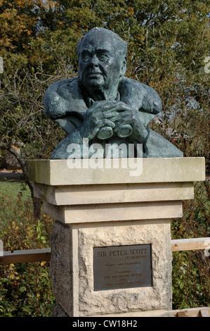 Bust of Sir Peter Scott at Wildfowl and Wetland Trust, Slimbridge, UK - Stock Photo