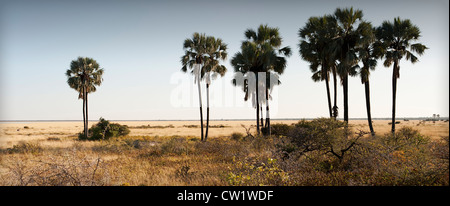 Twee Palms waterhole, Fischer's Pan, Etosha National Park, Namibia. - Stock Photo