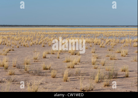 Fischer's Pan after rainfall, Etosha National Park, Namibia, Africa - Stock Photo