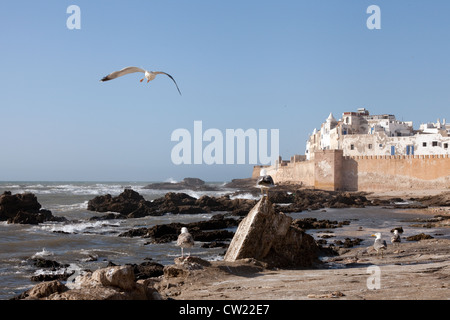 Seagulls and the medina and ramparts of Essaouira on the Morocco coast, North Africa - Stock Photo