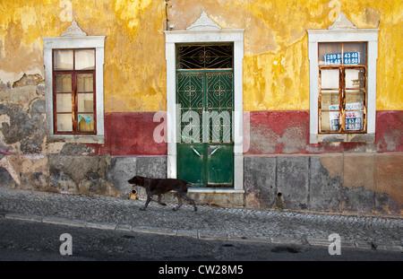 Dog passing a rundown house for sale in town of Estoi, near Faro, Algarve, Portugal - Stock Photo