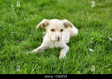 little cute puppy on green grass - Stock Photo