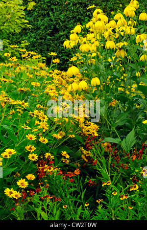 Yellow Coneflower (Ratibida pinnata) and red cone flowers, Greater Sudbury, Ontario, Canada - Stock Photo
