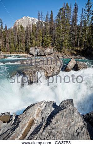Kicking Horse River Rapids near Natural Bridge, Yoho National Park, British Columbia, Canada - Stock Photo