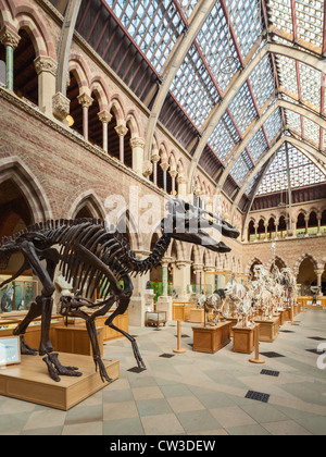 Oxford University Museum of Natural History - Stock Photo