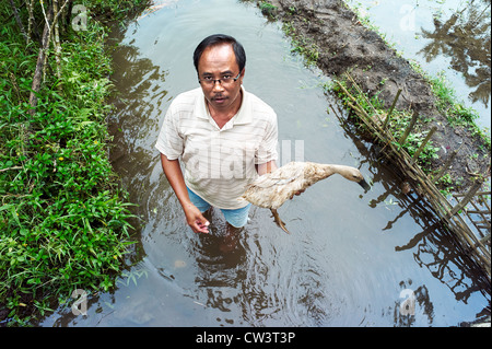 A man holding a duck while standing in the rice paddies in the Subaks of Indonesia. - Stock Photo