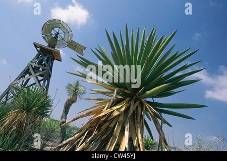 Shrub with windmill in background, Langtry, Texas - Stock Photo