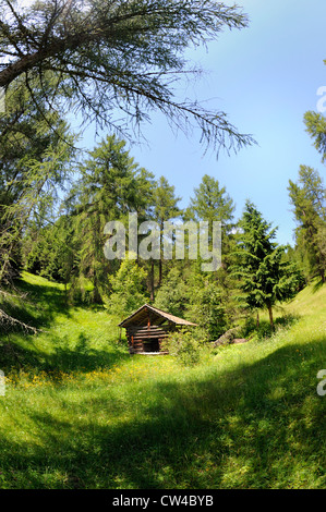 Traditional Austrian wooden storage barn or building set amongst wild flower meadows and trees in the Austrian alps. - Stock Photo
