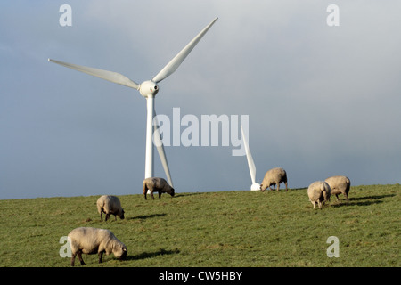 Emden, a flock of sheep on the dike near Emden with the wind farm Wybelsuner polder in the background - Stock Photo