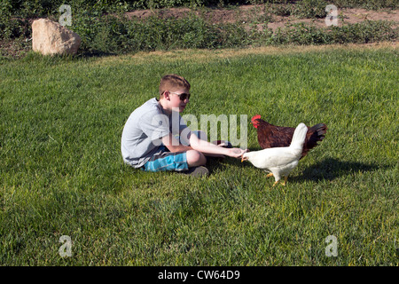 Boy feeding free-range chickens on the grass, sunny day, summer, central Utah. - Stock Photo