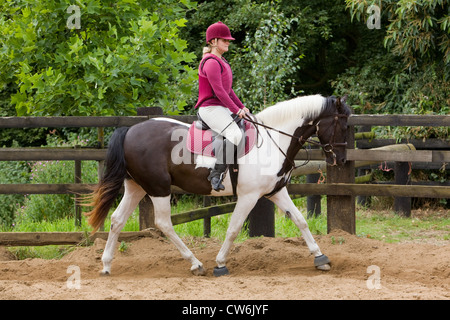 A young woman riding a horse around a sand training ring outside on a sunny summer day - Stock Photo
