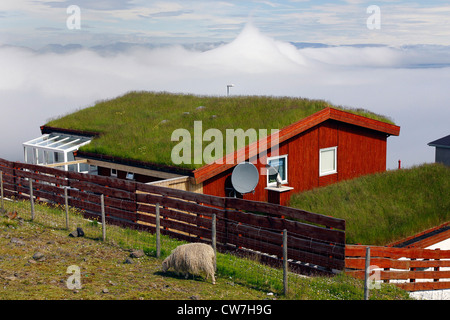 grass-roofed house, grazing sheep and bank of clouds, Denmark, Faroe Islands, Streymoy, Torshavn - Stock Photo