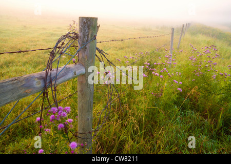 Barbed wire fence in fog near Rolly View, Alberta, Canada - Stock Photo