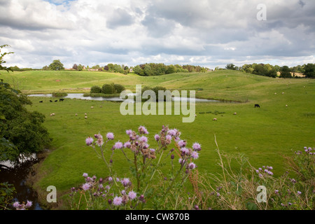 Looking north from the Shropshire Union canal across agricultural fields towards Nantwich - Stock Photo