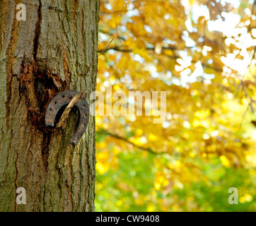 Rusty old horse shoe hanging on a tree in an autumn park - Stock Photo