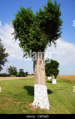 painted prunned trees exhibit oklahoma ok historic attraction attractions travel tractor road landscape view - Stock Photo