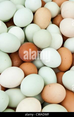 Large amount of eggs - Stock Photo