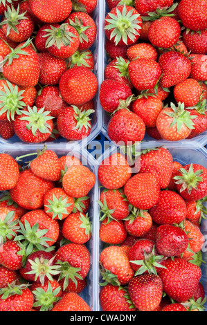 Strawberries in containers - Stock Photo