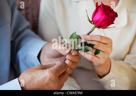 Senior man giving rose to senor woman - Stock Photo