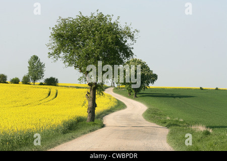Small road between two fields - Stock Photo