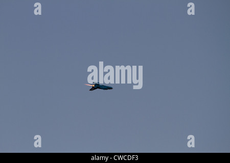 BUCHAREST - JULY 21: MiG performs at Bucharest International Air Show & General Aviation Exhibition (BIAS 2012) - Stock Photo