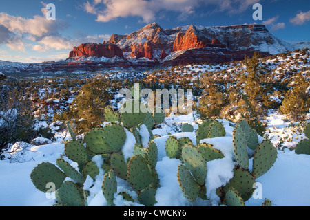 Winter snow on Schnebly Hill, Coconino National Forest, Sedona, Arizona. - Stock Photo