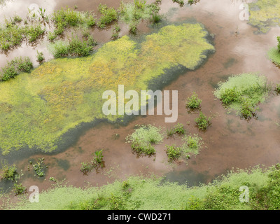 Algae growing in shallow stagnant pond water - Stock Photo