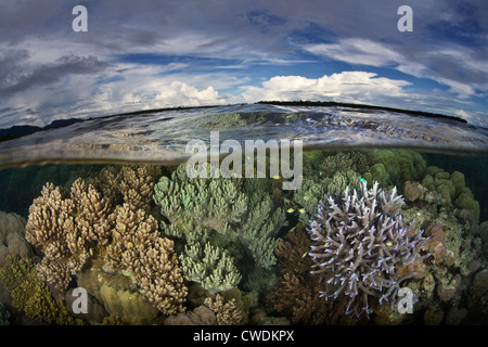 A diverse coral reef grows just under the waterline near a remote village in the Russell Islands, part of the Solomon - Stock Photo