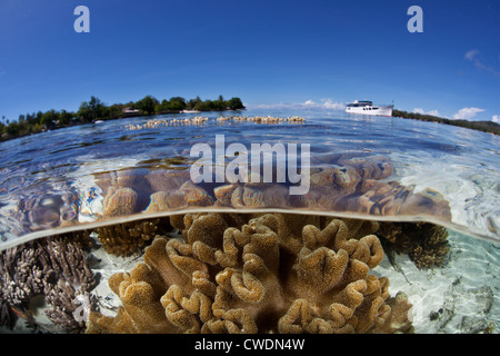 A liveaboard ship has anchored near a shallow coral reef where soft leather corals, Sarcophyton sp., grow. - Stock Photo