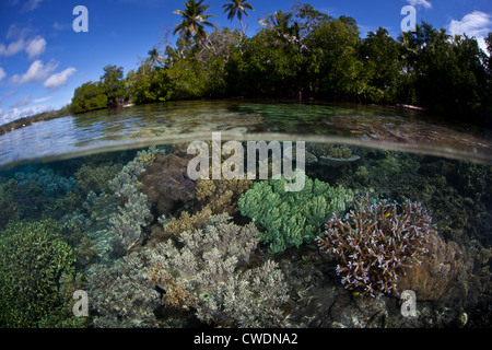 A diversity of corals compete for sunlight and space to grow on a shallow, protected reef flat near a mangrove forest. - Stock Photo