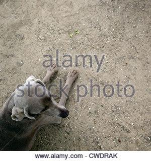 - Stock Photo
