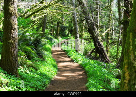40,314.00739 Sunlight filters onto a curving, crooked dirt forest path, foot trail that winds through a tunnel of - Stock Photo