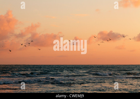 Birds flying over sea at sunset, Les Sables d'Olonne, Pays de la Loire, France. - Stock Photo