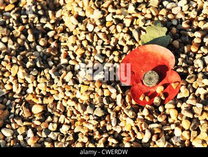 Red poppy in memoriam - Stock Photo