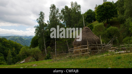 traditional agricultural landscape and practice in the piatra craiului national park, Brasov, Transylvania, Romania - Stock Photo