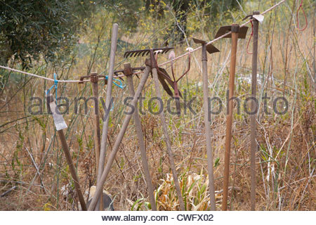 A selection of garden hand tools hanging on a rope between trees - Stock Photo