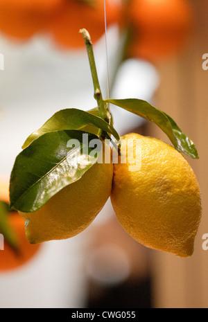 Berlin, Lemons - Stock Photo