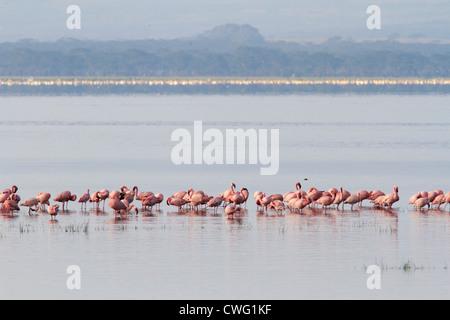 Lake Nakuru Kenya Africa - Stock Photo