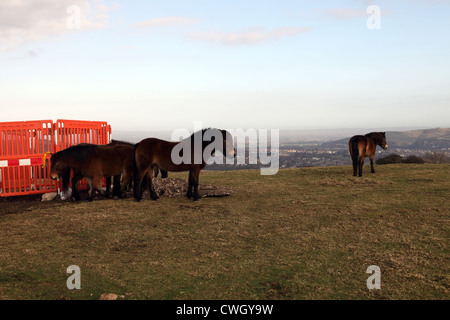 Ponies on the South Downs Way in East Sussex, England - Stock Photo