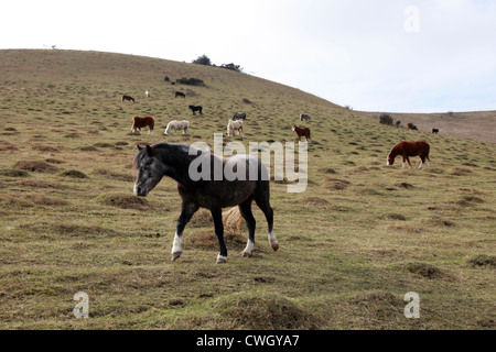 Horses on the South Downs in East Sussex, England - Stock Photo