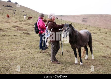 Lady ramblers with a pony on the South Downs, East Sussex, England - Stock Photo