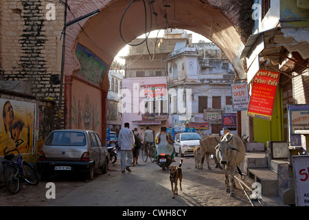 Street scene with holy cows in Bundi, Rajasthan, India