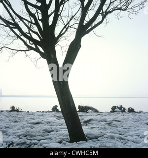Hamburg, Blankenese: Elbufer with tree in winter - Stock Photo