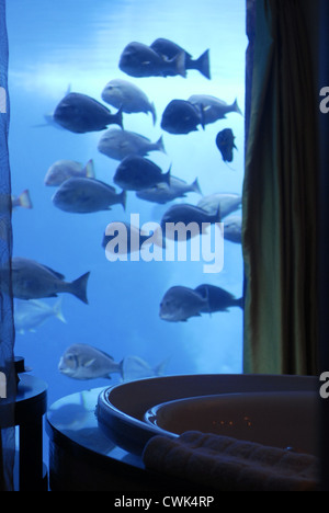 The Lost Chambers Suites in the Atlantis Hotel, The Palm, Dubai, UAE, United Arab Emirates,Persian Gulf, Arabian - Stock Photo