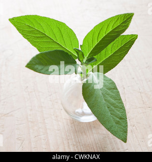 sage in the kitchen - Stock Photo