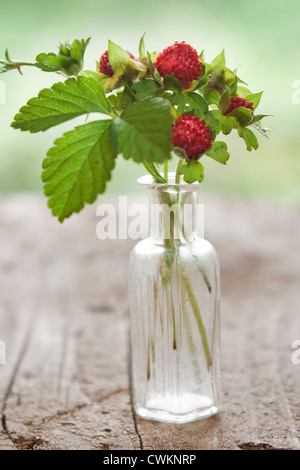 wild strawberries in a glas vase - Stock Photo