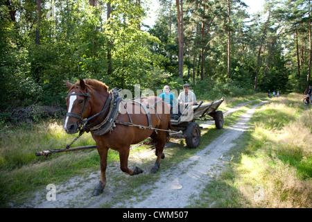 Senior Polish couple ridding horse drawn wagon on logging trail through the Polish National Forest. Zawady Central - Stock Photo